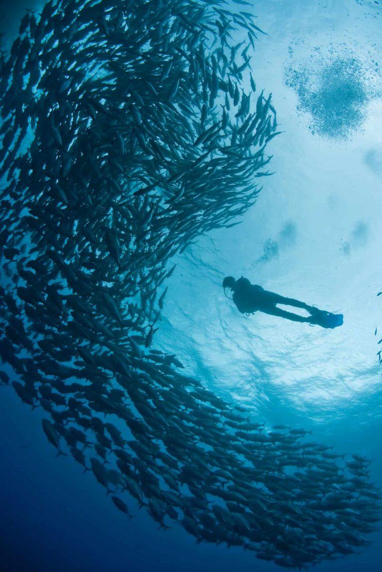 scuba diver and schooling fish